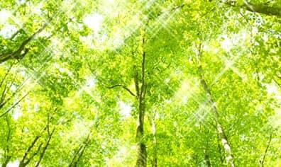 「光触媒」 太陽の光を使って環境浄化する塗料