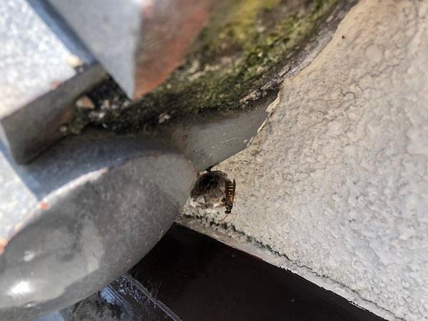 大阪府茨木市 O様邸 雨漏り修理工事 雨漏りの二次被害 外壁クラック (2)